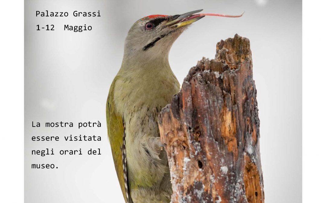Mostra fotografica a Chioggia
